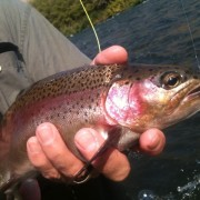 Deschutes Redside Trout