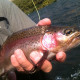 Deschutes Trout AWA