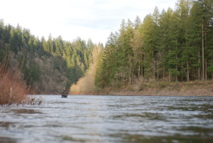 Hunting steelhead in  the finest water we can fish!!