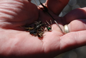 Plenty of bugs around for the trout to consume!!