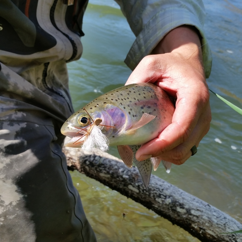 The deschutes salmon fly hatch all waters angling for Hatch fly fishing