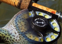 Nothing like trout that fight as good as your equipment!