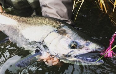 Not everything below the surface is a steelhead...